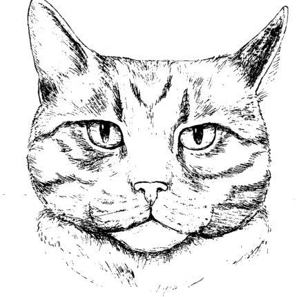Katze im Sack - Überraschungsmenü im ARX Restaurant